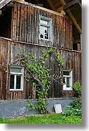 barn, bohinj, europe, ivy, slovenia, vertical, windows, photograph