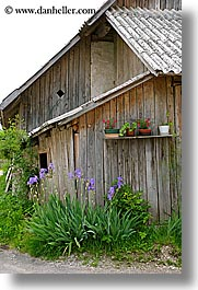 barn, bohinj, europe, flowers, orchids, purple, slovenia, vertical, photograph