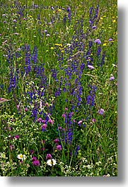 bohinj, europe, flowers, slovenia, vertical, wildflowers, photograph