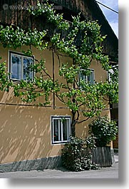 bohinj, europe, ivy, slovenia, vertical, walls, photograph