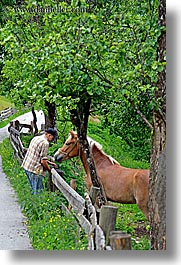 bohinj, europe, haflinger, horses, men, slovenia, vertical, photograph