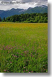 bohinj, europe, mountains, scenics, slovenia, vertical, wildflowers, photograph