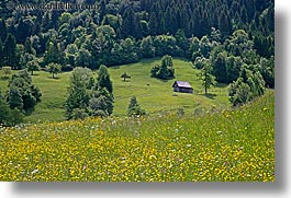 bohinj, europe, horizontal, scenics, shed, slovenia, wildflowers, photograph