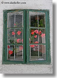 dirty, europe, flowers, ljubljana, slovenia, vertical, windows, photograph