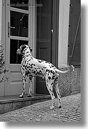 black and white, dalmation, doors, europe, ljubljana, slovenia, vertical, photograph