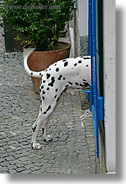 dalmation, doors, europe, humor, ljubljana, slovenia, vertical, photograph