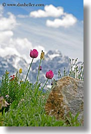 clouds, europe, flowers, logarska dolina, mountains, scenics, slovenia, snowcaps, tulips, vertical, photograph