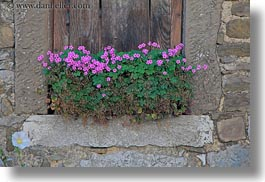 europe, flowers, horizontal, miscellaneous, pink, slovenia, windows, woods, photograph