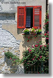 europe, flowers, pirano, slovenia, vertical, walls, windows, photograph
