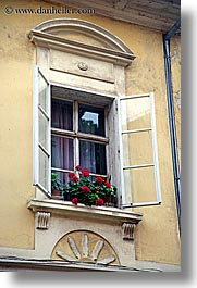 europe, flowers, ptuj, slovenia, vertical, windows, photograph