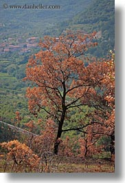 browns, europe, landscapes, leaves, scenics, slovenia, trees, vertical, photograph