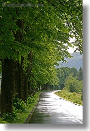 europe, landscapes, lined, roads, scenics, slovenia, trees, vertical, photograph