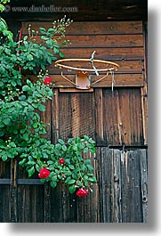 basketball, europe, flowers, hoop, slovenia, styria, vertical, photograph