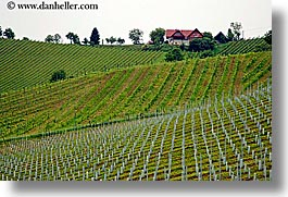 europe, foggy, horizontal, houses, slovenia, styria, vineyards, photograph