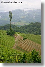 europe, foggy, slovenia, styria, vertical, vineyards, photograph
