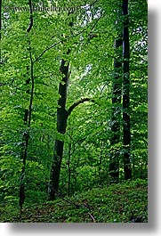 europe, lush, slovenia, styria, trees, vertical, photograph