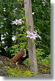 europe, flowers, pink, slovenia, styria, vertical, wires, photograph