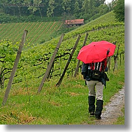 europe, red, slovenia, square format, styria, umbrellas, vineyards, photograph