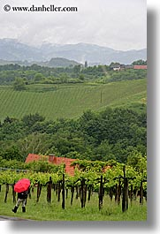 europe, red, slovenia, styria, umbrellas, vertical, vineyards, photograph