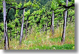 europe, horizontal, slovenia, styria, vineyards, photograph