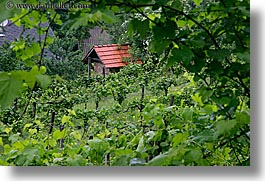 europe, horizontal, houses, slovenia, styria, vineyards, photograph