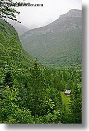 europe, forests, lush, slovenia, trees, triglavski narodni park, valley, vertical, photograph