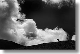 black and white, clouds, cows, europe, horizontal, mt bisaurin, silhouettes, spain, photograph