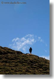 activities, europe, hikers, hiking, hills, mt bisaurin, people, spain, vertical, photograph