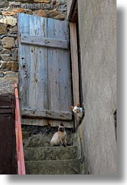 cats, doors, europe, spain, stairs, torla, vertical, photograph