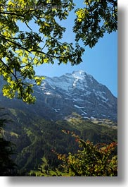 eiger, europe, grindelwald, leaves, mountains, nature, snowcaps, switzerland, trees, vertical, photograph