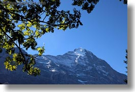 eiger, europe, grindelwald, horizontal, leaves, mountains, nature, snowcaps, switzerland, trees, photograph