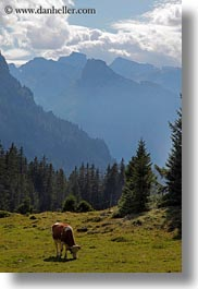 clouds, cows, europe, kandersteg, lake oeschinensee, mountains, nature, sky, switzerland, vertical, photograph