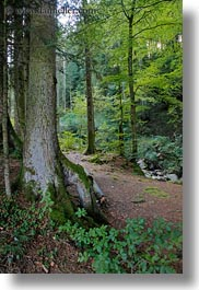 europe, forests, lucerne, mt pilatus, switzerland, vertical, photograph