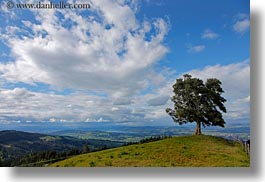 clouds, europe, horizontal, lone, lucerne, mt pilatus, nature, sky, switzerland, trees, photograph