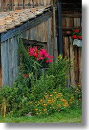 barn, europe, flowers, lucerne, mt rigi, switzerland, vertical, photograph