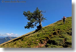 europe, hikers, horizontal, lucerne, mountains, mt rigi, switzerland, trees, photograph