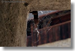 chateau de chillon, europe, horizontal, montreaux, spider, switzerland, web, photograph