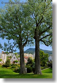 cottonwood, europe, montreaux, switzerland, trees, two, vertical, photograph