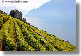europe, horizontal, houses, montreaux, mountains, st saphorin, switzerland, vineyards, photograph