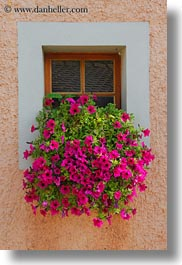 europe, flowers, montreaux, nature, petunias, switzerland, vertical, villette, windows, photograph