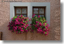 europe, flowers, horizontal, montreaux, nature, petunias, switzerland, villette, windows, photograph