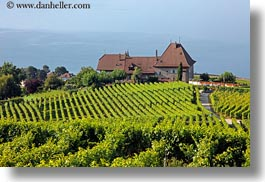 europe, horizontal, houses, lakes, montreaux, switzerland, villette, vineyards, photograph