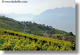 europe, horizontal, lakes, montreaux, switzerland, towns, villette, vineyards, photograph
