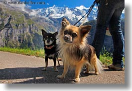 clouds, dogs, europe, horizontal, murren, nature, pomaranian, sky, switzerland, two, photograph
