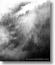 black and white, europe, foggy, scenics, switzerland, trees, vertical, photograph