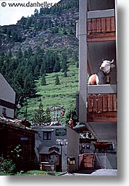 apartments, cows, europe, switzerland, vertical, zermatt, photograph