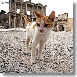 architectural ruins, cats, ephesus, europe, library, square format, turkeys, photograph