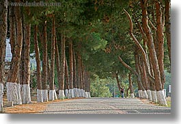architectural ruins, ephesus, europe, horizontal, lined, roads, trees, turkeys, photograph