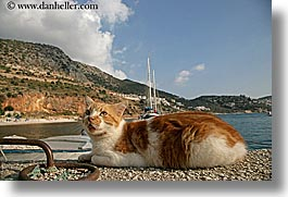 cats, europe, harbor, horizontal, kalkan, turkeys, photograph