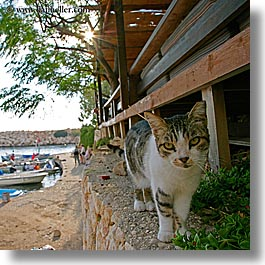 cats, europe, kalkan, square format, turkeys, walls, photograph